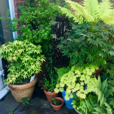 Accidental foliage corner