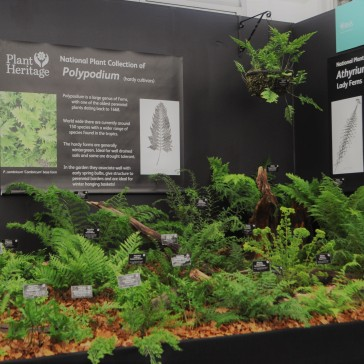 National Collection of Ferns
