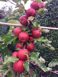 Martins Custard Heritage Apple