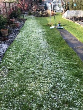 Half frost